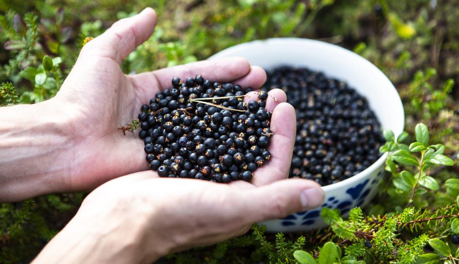 marjat, metsä, luonto, terveys, variksenmarja, kesä, vitamiinit, polyfenolit, antosyaanit