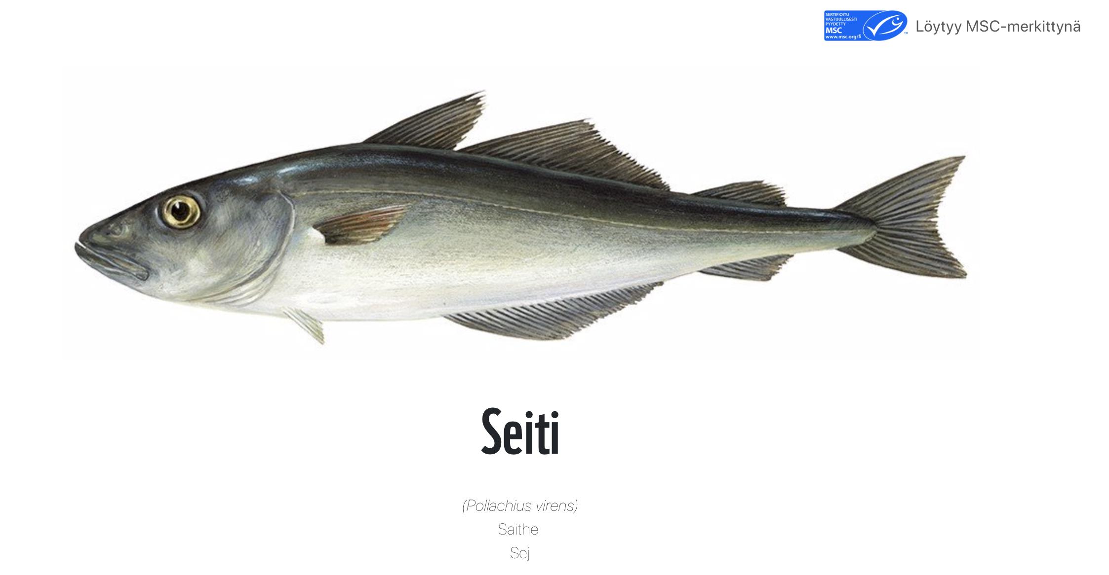 MSC, MSC Suomi, seiti, seitifile, seiti kala, sei, kala, kalavalinnat, vastuullinen kala, vastuulliset kalavalinnat, kalastus, ruodoton,